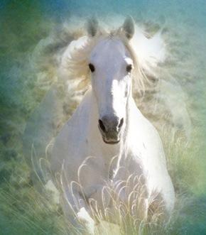 horses_shadowfax_1280