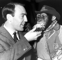 The Black-And-White-Years: Jimmy Greaves Feeds Cake To A Chimpanzee, 1964