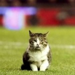 'Cat On The Pitch' By Vom Vorton – Surprisingly Good Song About Anfield Cat (Video)