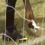 Gambia Keeper Sprinkles Mysterious 'Magic' Powder Across Goal Line, Still Drops An Absolute Clanger (Video)