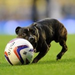 Goodison Dog Scores Screamer Before Everton vs Leyton Orient, Marouane Fellaini Successfully Clones Himself (Video)