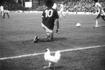 Un coq de Francais strolls down the sideline past Michel Platini at Euro 1984