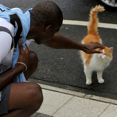 Man City Announce Day Of Mourning As Long-Serving Club Cat 'Wimblydon' Dies Of Old Age
