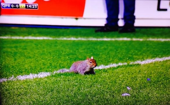 suarez-squirrel