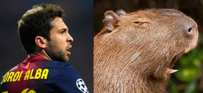 SLAL-alba-capybara