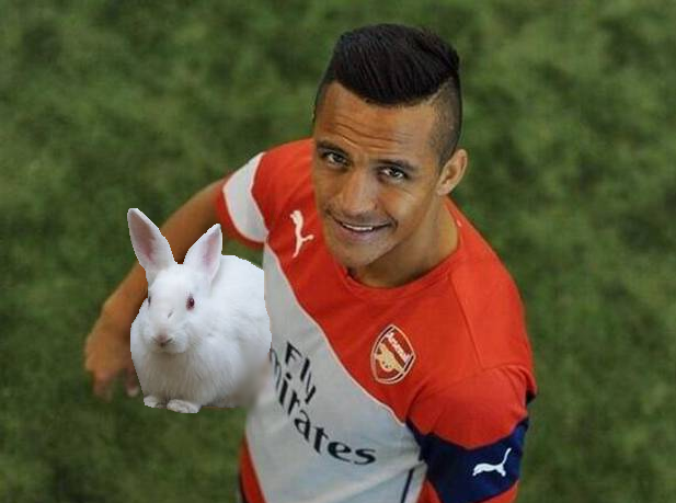 sanchez-rabbit