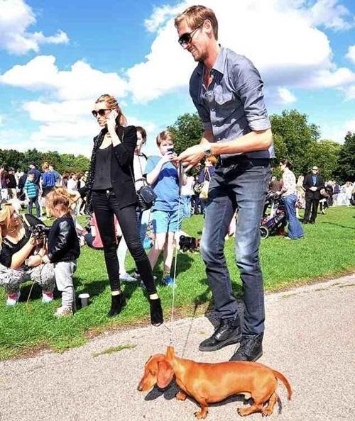 crouch-dachshund