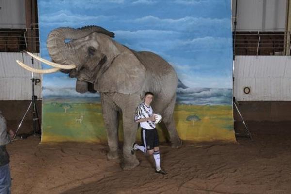 lahm-elephant
