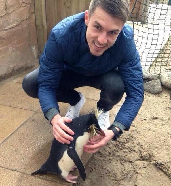 ramsey-penguin