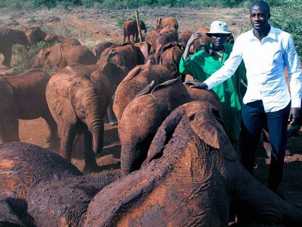 yaya-elephant