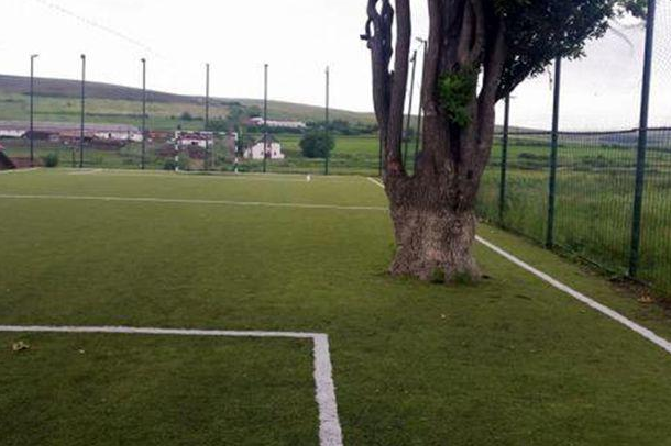 tonciu-tree-pitch-romania