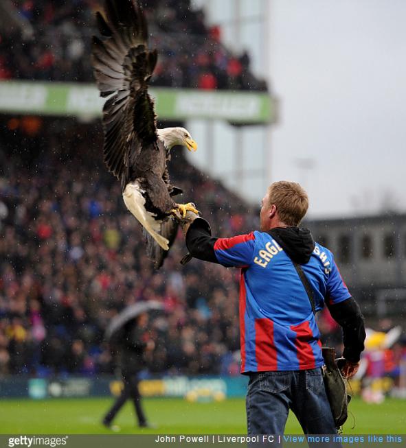 palace-eagle-