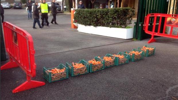 roma-rabbits-carrots2