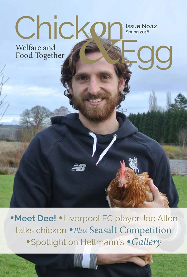 joe-allen-chicken-egg