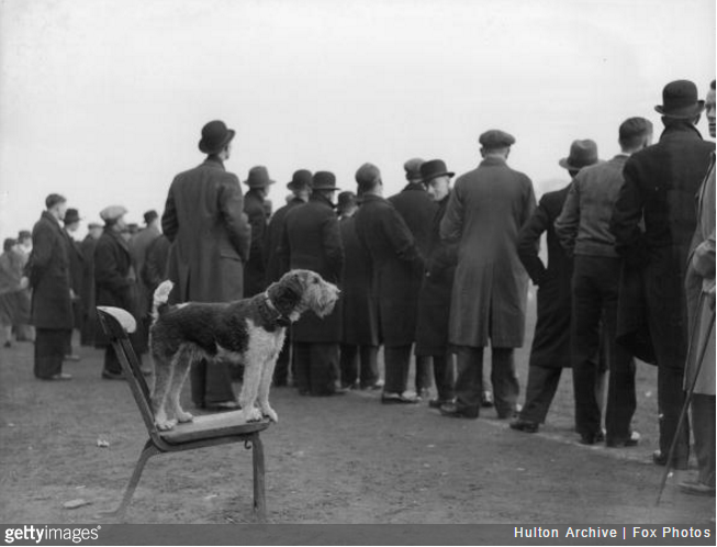dog-football-match
