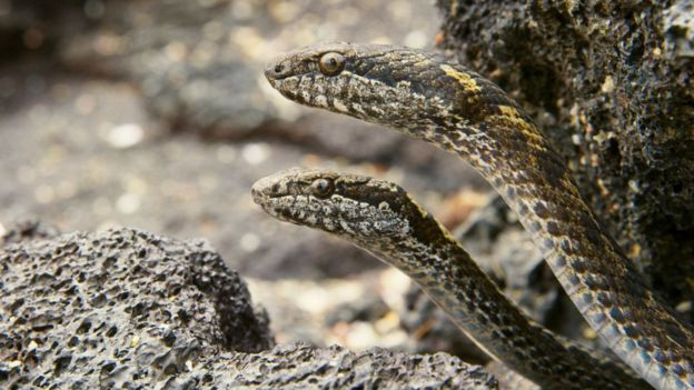 snakes-planet-earth-2